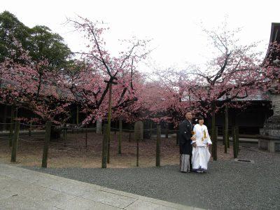 宮地嶽神社 寒緋桜の下で挙式記念写真